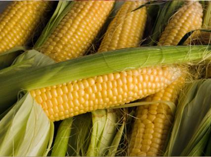 Семена кукурузы (Краснодарская 385 МВ)