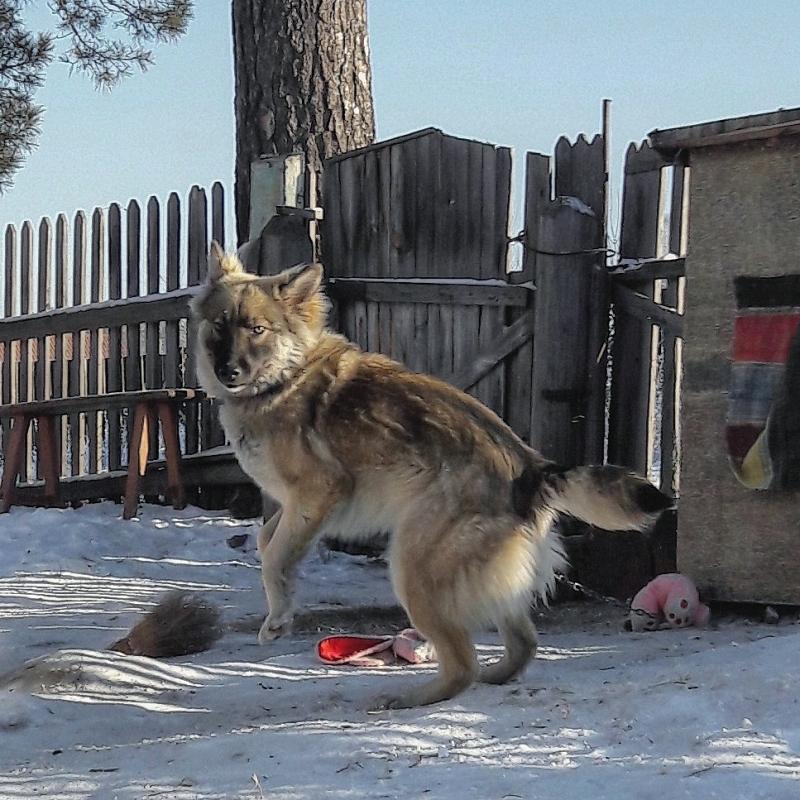 Потерялась собака в районе п.Лесной