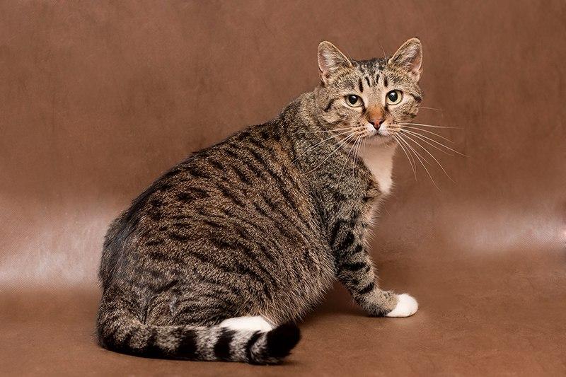 Кошечка по кличке Рыся ищет дом