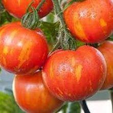 Полосатые томаты, семена на скороспелка.рф