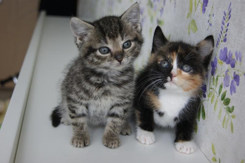Сладкие котята- девочки 1.5 мес в дар