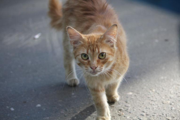 Красивый рыжий котнок-подросток пропадает на улице