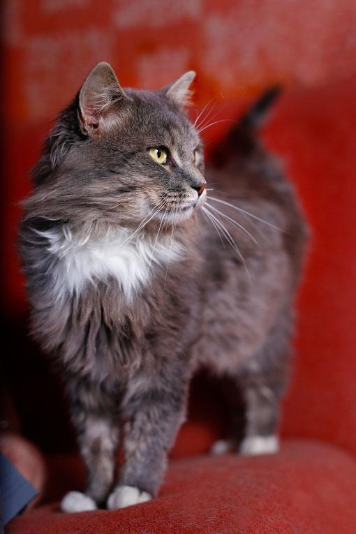 Спокойный молодой котик Тихон в добрые руки