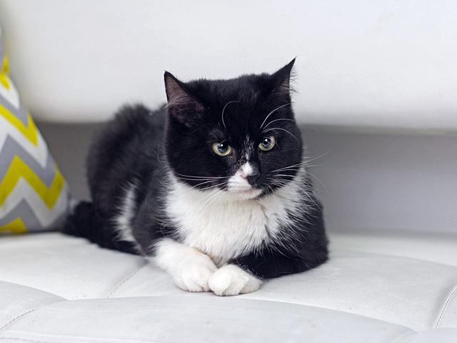 Милейшие, трогательные котята-подростки Луи и Мира в добрые руки