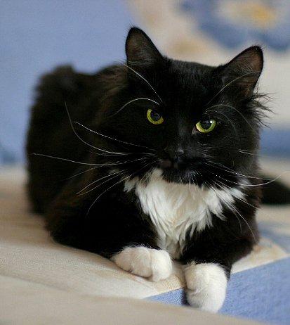 Потерялся котик Кузя