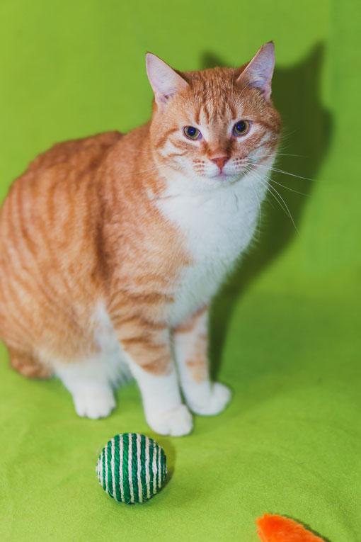 Самый уютный котик на свете - Инжир ищет семью