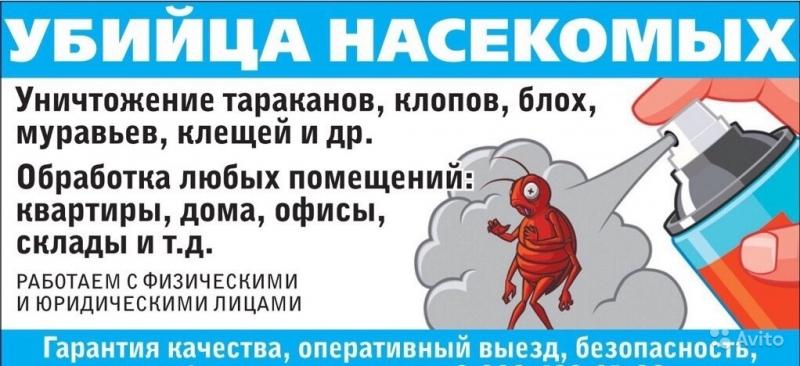 Уничтожение насекомых СПб. Дезинсекция. Вытравить тараканов, клопов, блох.