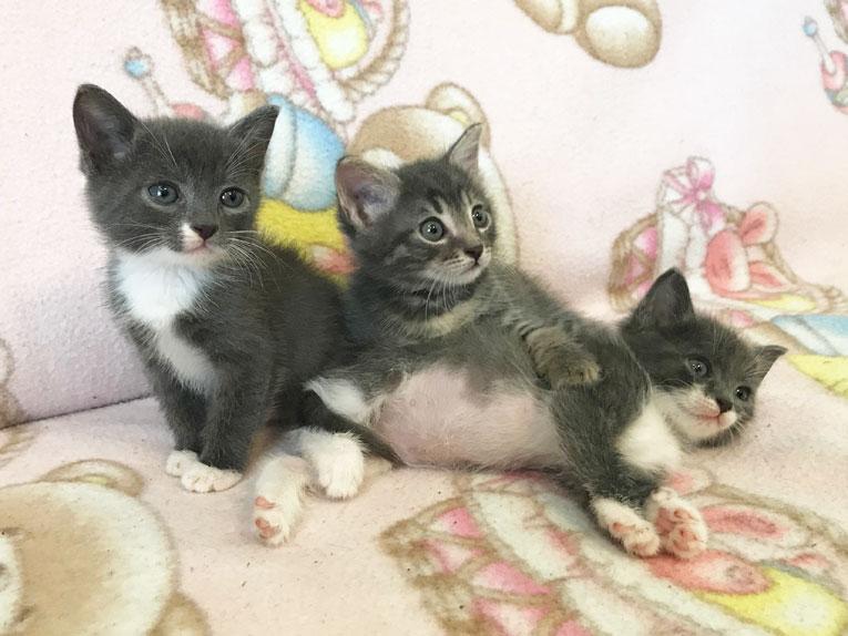 Маленькие, очень красивые котята в дар
