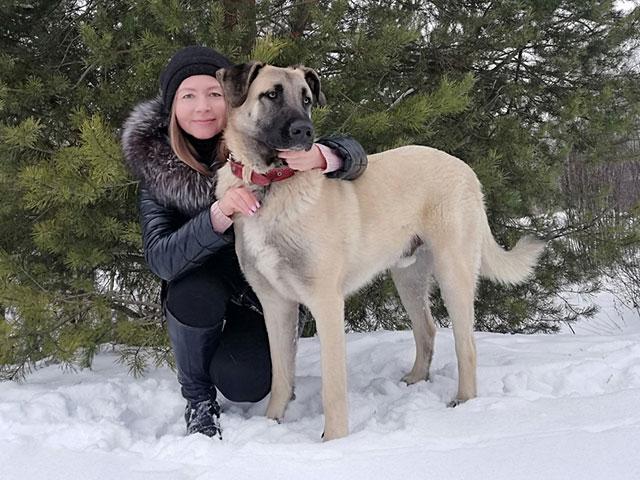 Великолепный молодой пес Сэм, метис конгала в добрые руки