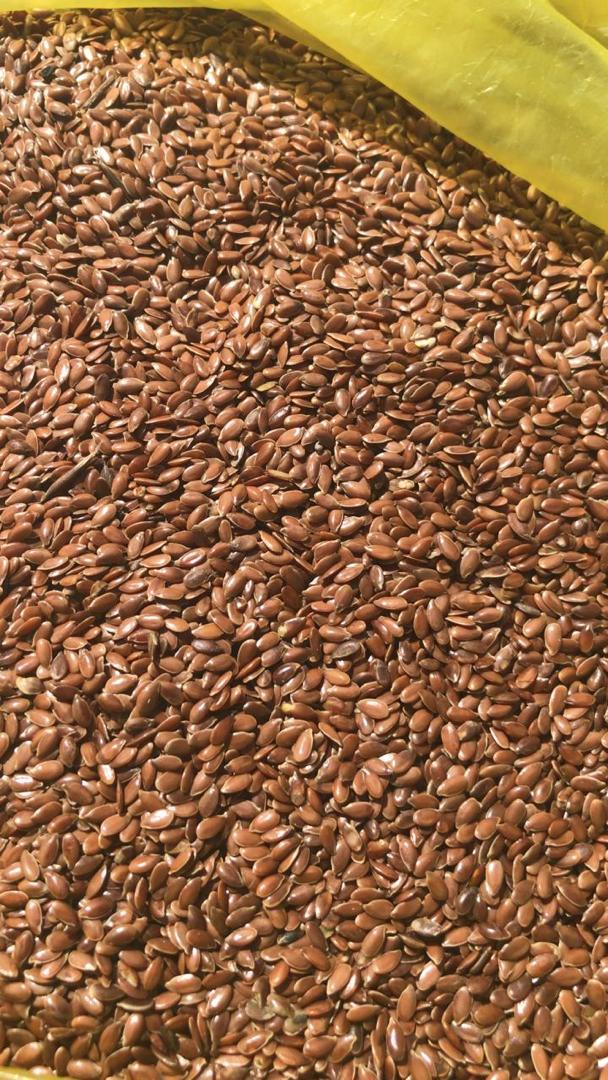 Продаю на экспорт масличный  лн